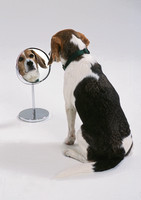 0020_dog_with_mirror_fin